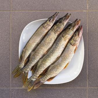 신선한 생선은 파이크입니다. 다음에 잡힌 파이크 거짓말 4 개. 민물 fisâh. 신선한 파이크. 전천후 강 물고기. 하얀 접시에 신선한 생선입니다.