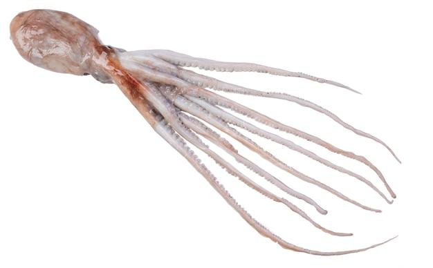 Fresh fish, octopus on white surface