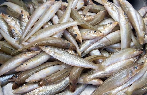 접시에 갓 잡은 생선의 신선한 생선