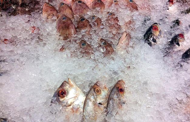インドネシア、ジョグジャカルタのスーパーマーケットの氷上で新鮮な魚
