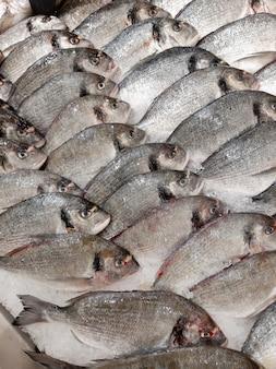 氷の上で新鮮な魚