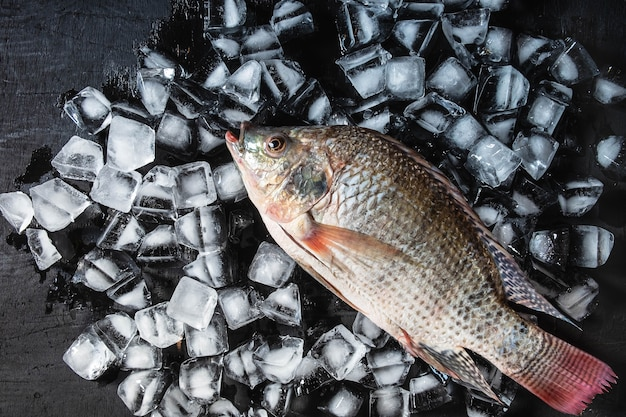氷上の新鮮な魚