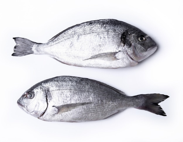 Свежая рыба на белом