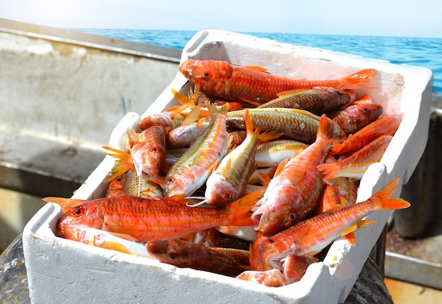 Fresh fish red mullet