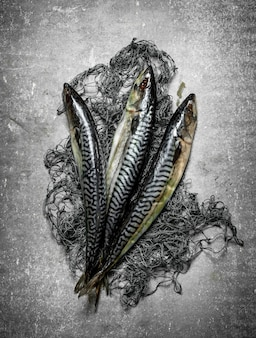 漁網付きの新鮮な魚。