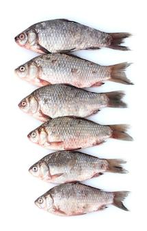 白で隔離される新鮮な魚