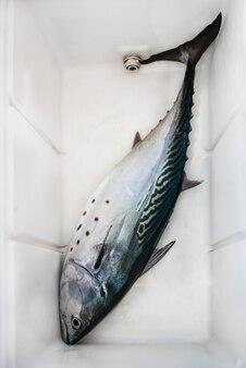 Свежий улов - тунец в пластиковом ящике