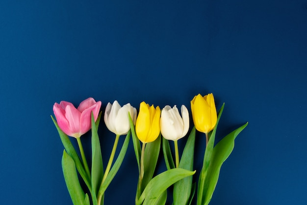 Fresh flower on classic blue background, copy space, top view