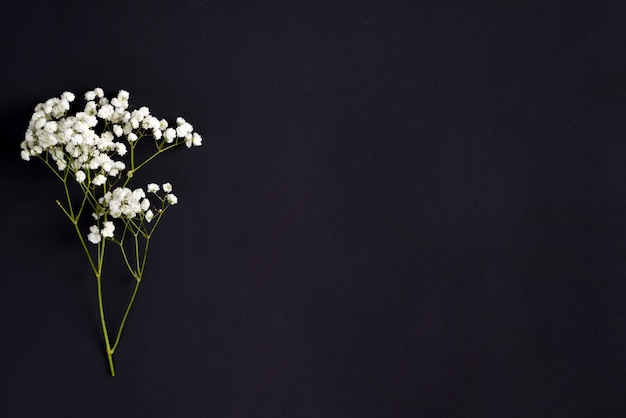 Fresh flower twigs of gypsophila plant as a corner greeting border on a black background. top view.