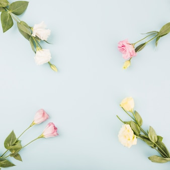 Fresh flowers on blue background