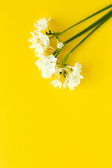Fresh flowers on color background from above