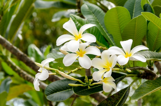Fresh of flowers and green leaves on green background