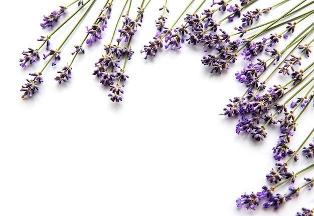 Букет из свежих цветов лаванды