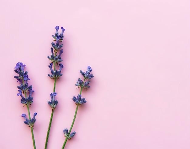 Свежие цветы лаванды на розовой поверхности