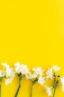 위에서 색 배경에 신선한 꽃
