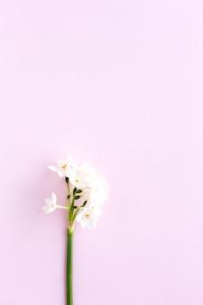 색상에 신선한 꽃