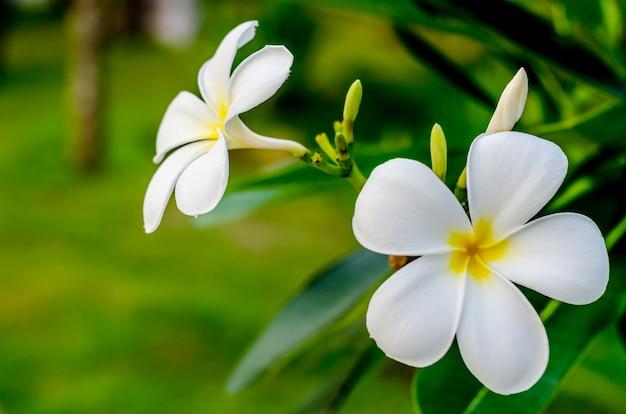 スパガーデンの新鮮な花