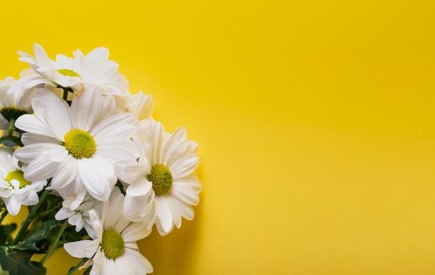 신선한 꽃, 흰 국화. 잘라 자연 꽃의 무리, 근접.