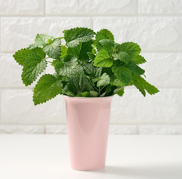 Fresh fragrant mint in ceramic pink vase on white table, white brick wall background