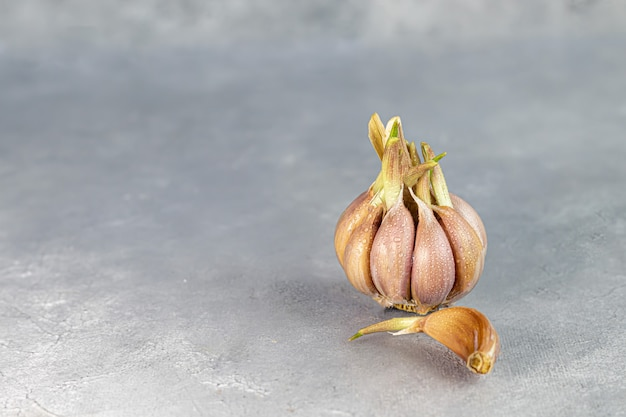 Fresh garlic on a gray background. healthy food, seedlings. copy space.