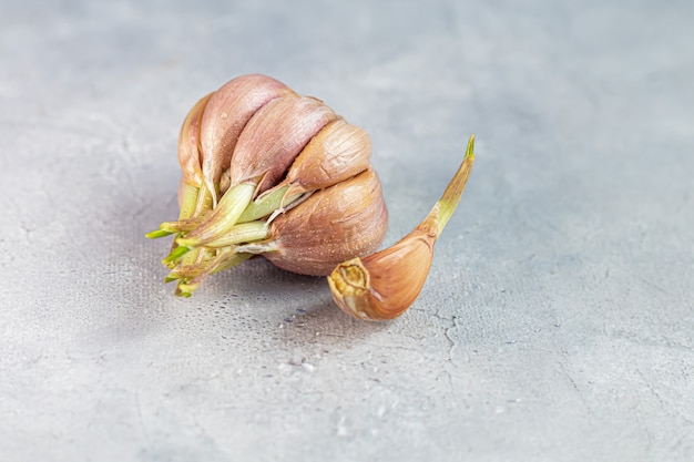 Fresh garlic on a gray background. healthy food, seedlings. copy space.