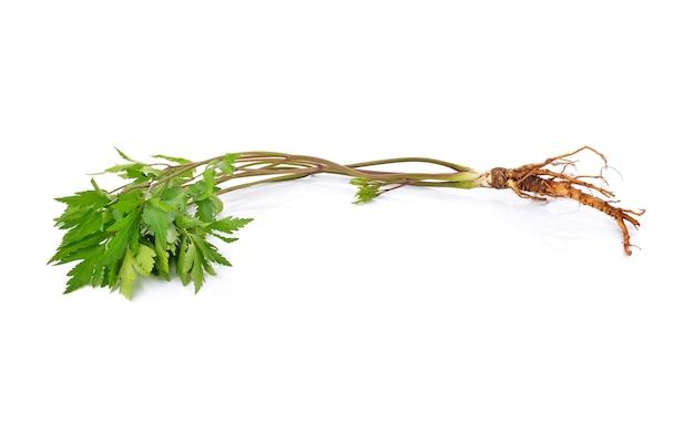 新鮮な高麗人参の根とカラトウキの葉が白で分離されました