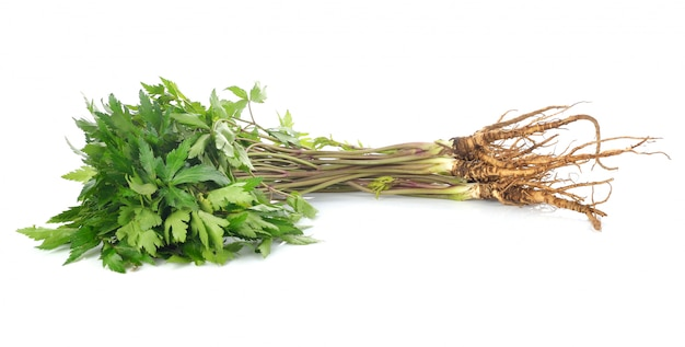 Fresh ginseng root on white background.