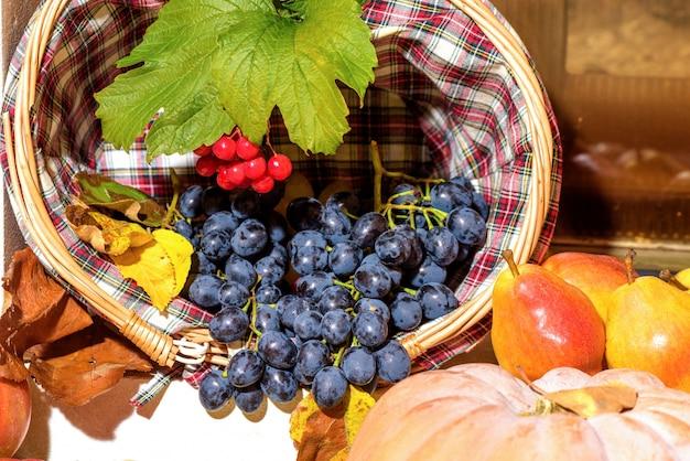 Fresh grapes, pears and pumpkin. autumn seasonal fruits harvest
