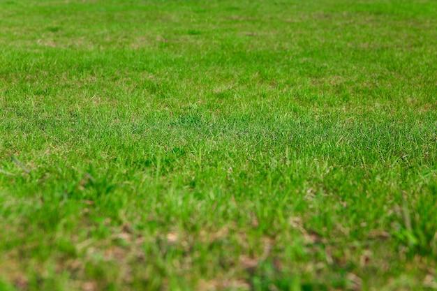 Свежая трава на лужайке крупным планом