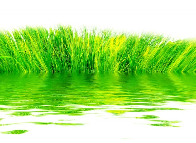 Fresh grass reflected in water