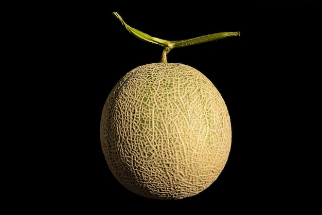 Fresh green andes melon isolated on black background illuminated by natural light.