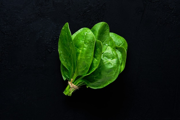 추상 검은 배경에 신선한 녹색 아기 시금치 잎