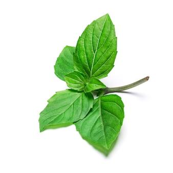 Свежие зеленые листья травы базилика, изолированные на белом фоне. закройте вверх.