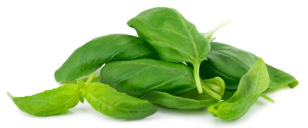 Fresh green basil herb leaves isolated.
