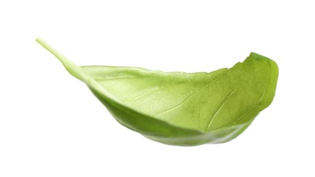 Свежий зеленый лист базилика, изолированные на белом фоне