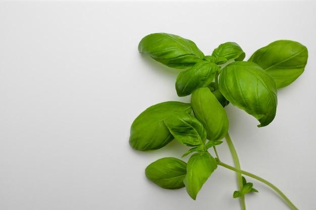 Свежие зеленые листья базилика на белом фоне, вид сверху, плоская планировка