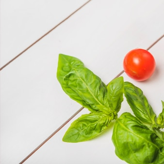 Fresh green basil leaves with single red whole tomato