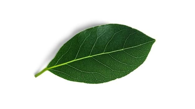 白で隔離される新鮮な緑の月桂樹の葉