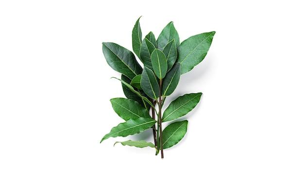 白で隔離された新鮮な緑の月桂樹の葉。