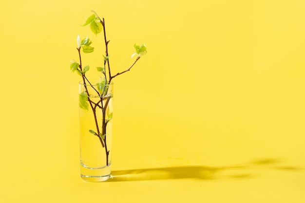 Fresh green birch branches through liquid water on yellow.
