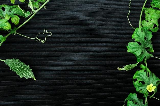 新緑のゴーヤと緑の葉