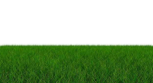 잔디의 신선한 녹색 블레이드 - 흰색 배경에 - 3d 일러스트 절연