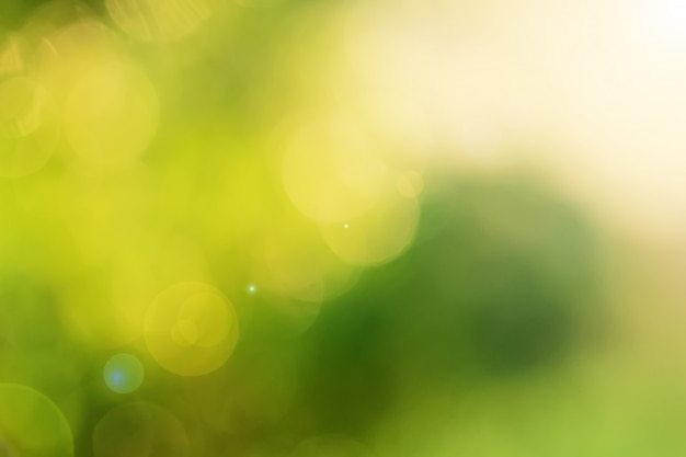 Fresh green bokeh background