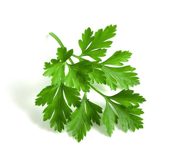 흰색 배경에 분리된 잎이 있는 파슬리의 신선한 녹색 지점.