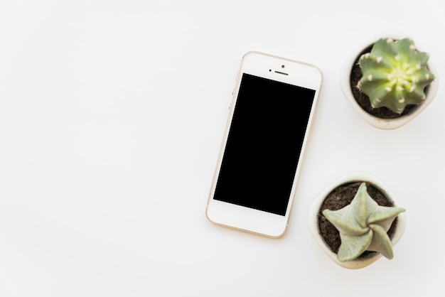 Fresh green cactuses near smartphone