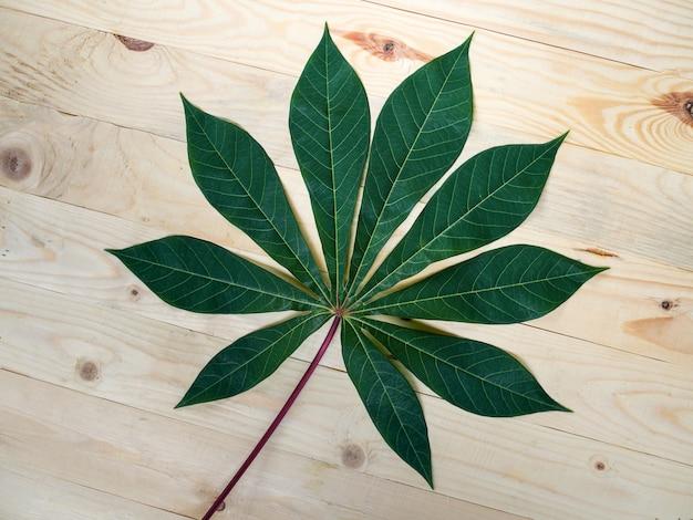 新鮮な緑のキャッサバの葉のトップビュー
