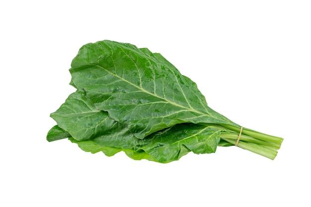 新鮮な緑のフダンソウの葉