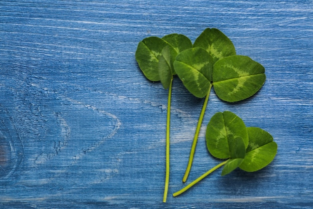 Fresh green clover on color wooden table