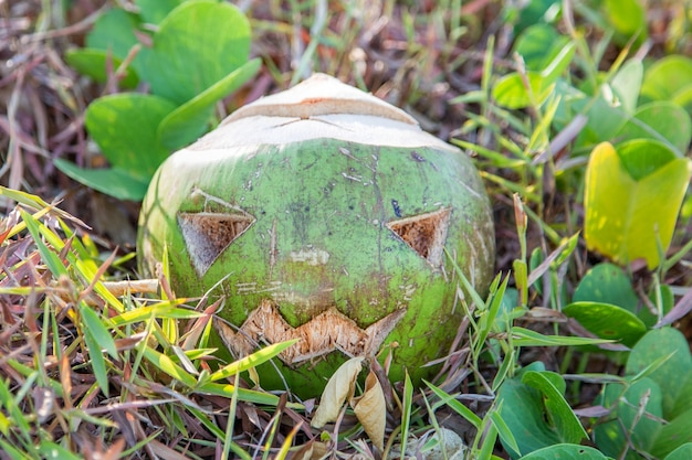 新鮮な緑のココナッツは、カボチャに刻まれた顔をしたハロウィーンのシンボルです草の上に横たわっています