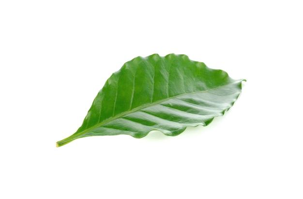 白で隔離の新鮮な緑のコーヒーの葉